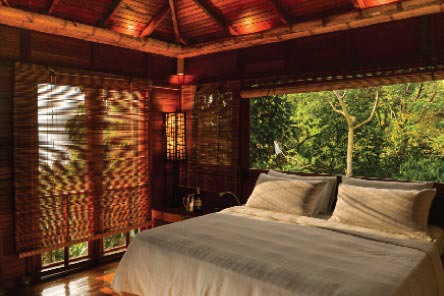 Treetop Room Category