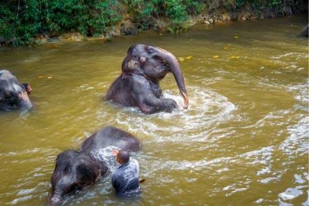 Elephant Daytrip Selangor